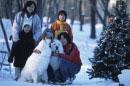 二匹の白い犬(ピレネー)とファミリー