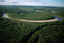 An aerial view of boreal forest (taiga) in summer near Nadym
