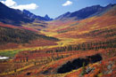 The Tombstone Valley in autumn colour. Yukon. Canada