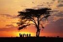 Group of Maasai men at sunrise, Kenya