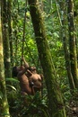 Huaorani Indians out hunting with their blowguns. Gabaro Com