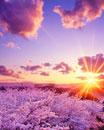 桜林と夕日