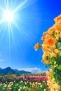 バラの花園と冠着山と大望橋と太陽