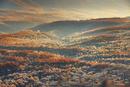朝の小浅間山から望む白糸の滝方向の霧氷のカラマツ樹海