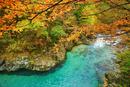 阿寺渓谷の狸ヶ淵の紅葉