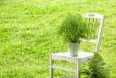 植物の乗った白い椅子