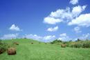 夏草と牧草地