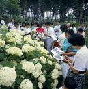 植物園での観察会
