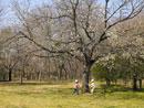 木の下でチャンバラごっこをする男の子2人