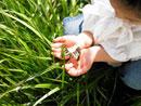 草の中に蝶々を見つけた女の子