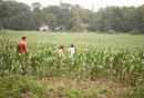 トウモロコシ畑を散歩する父と子供たち