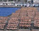 干物の天日干しと漁港