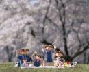 お花見を楽しむ人形の家族