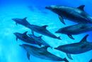 バハマの白砂の海底を泳ぐイルカたち