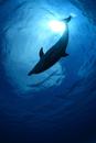 シャボン玉と青い海