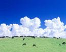 入道雲と黒毛和牛 宗谷丘陵