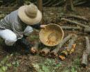 ナメコ栽培