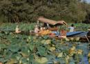 ダル湖の水上朝市 スリナガル インド