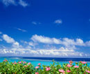 玉取崎より望むハイビスカスと海