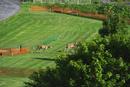 パークゴルフ場とエゾシカ