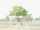石の鉢に植わってる木