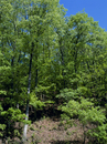 コナラ林の定点G 13-6
