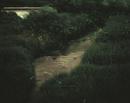 夜の川を飛び交うゲンジボタル