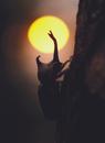 夕陽とカブトムシ