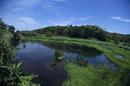 メダカが好きな浅くて広い池