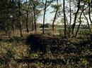 落ち葉を積んだ堆肥(中はまさにカブトムシの幼虫の宝庫)