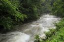 増水したオオサンショウウオの生息河川