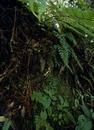 キジロオヒキグモ 林床の下草に張られた網とメス成体