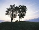 キタキツネ 子供 大きな木の下のシルエット