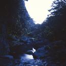 渓谷を群れ飛ぶゲンジボタル