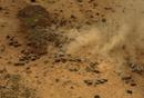 アフリカゾウの群れ 空撮
