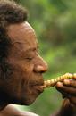 地虫を食べるパプア人
