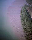 セントジョージ盆地 マングローブとイリエワニの生息地