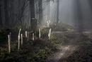 ノーフォークの森の小径