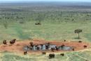 水飲み場のアフリカゾウの群れ