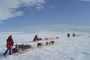 氷原をそりを引くシベリアンハスキー