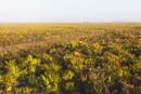ノコギリヤシの茂みと未舗装の道