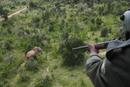 アフリカゾウの母子にヘリコプターから麻酔を打つ(Mwalug