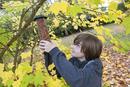 Boy hanging birdfeeder from tree in garden, Norfolk, England