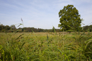 Open marshy grassland and reedbed habitat on wetland nature