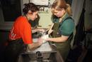 Seabird rescue, contaminated Common Guillemot (Uria aalge) b