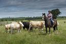 Cattle farming, woman rounding up cattle on horseback, herd