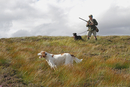 Grouse shooting, man with shotgun, retriever and setter dogs