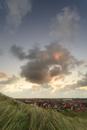 夜明けのテセル島