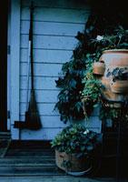 ガーデニング テラスの植木