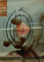 球体の中のバラを持つ手のコラージュ